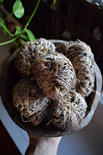 Load image into Gallery viewer, ROSE OF JERICHO | THE RESURRECTION FLOWER | REBIRTH | AWAKENING | PLANT MAGICK