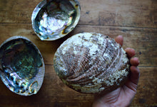 Load image into Gallery viewer, LARGE ABALONE SHELL | SMUDGE BOWL | ABALONE DISH | INCENSE BURNER | SAGE SMUDGE BOWL