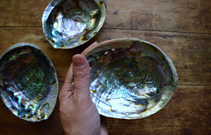 LARGE ABALONE SHELL | SMUDGE BOWL | ABALONE DISH | INCENSE BURNER | SAGE SMUDGE BOWL