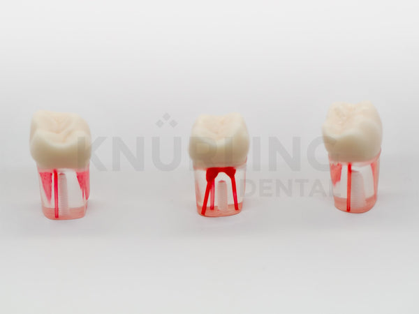 S12-200 – Clear Root Endodontic Teeth