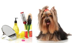Best Grooming Tips for Small Dogs