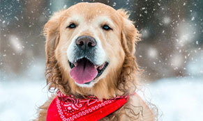Best Activities for the Dog in the Winter