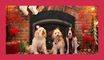 Woof! Dogs Celebrating Christmas and Hanukkah!