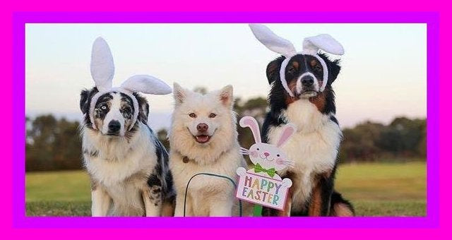 Woof! Celebrate Easter & Spring with your Dogs!