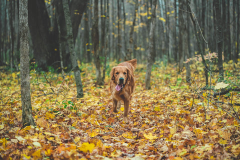 Best Tips for Hiking with your Dog – Happy Wags!, inc