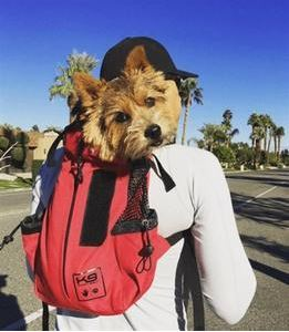 K9 Sport Backpack For Hiking With Your Dog