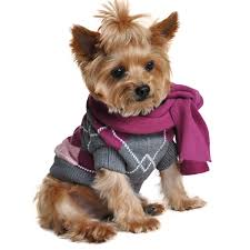 Dog Sweater Argyle Purple with Scarf