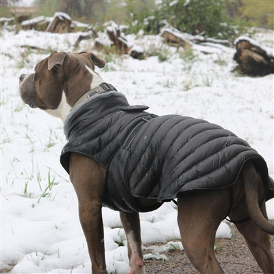Dog Coat Black Alpine Puffer by Doggie Design XS-5XL