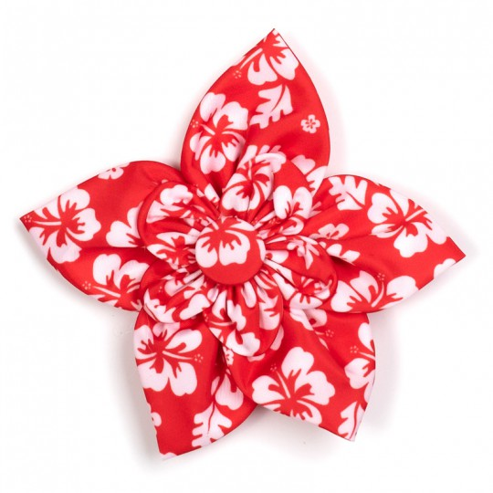Dog Collar attachment Aloha Coral Flower