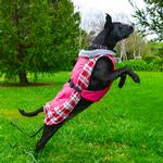 Dog Coat Alpine All-Weather Dog Raspberry Plaid