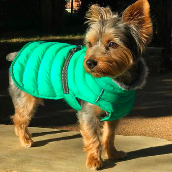 Dog Coat Green Alpine All-Weather