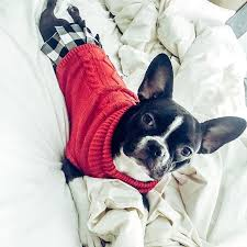 Dog Sweater Turtleneck Dress Red Black