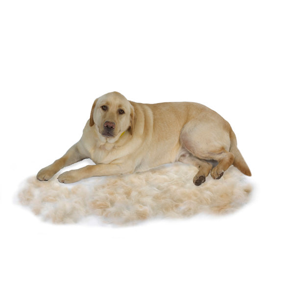 Short Hair FURminator deshedding for Large Dogs