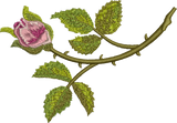 Classic Rose Bud Embroidery Motif - 03 -  Floral Illusions - by Sue Box