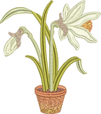 Daffodil Flower Bulb 3 Embroidery Motif - 20 -  Embroidery Favourites by Sue Box
