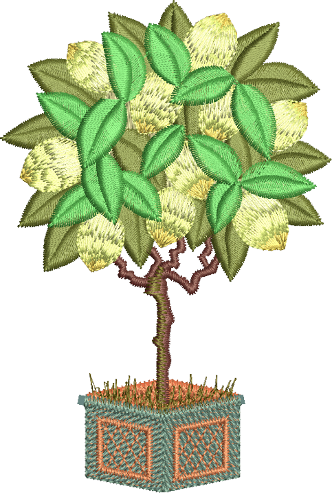 27 - Lemon Tree