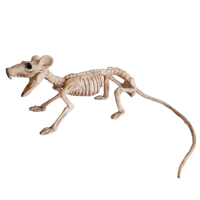 Skeletons Animals