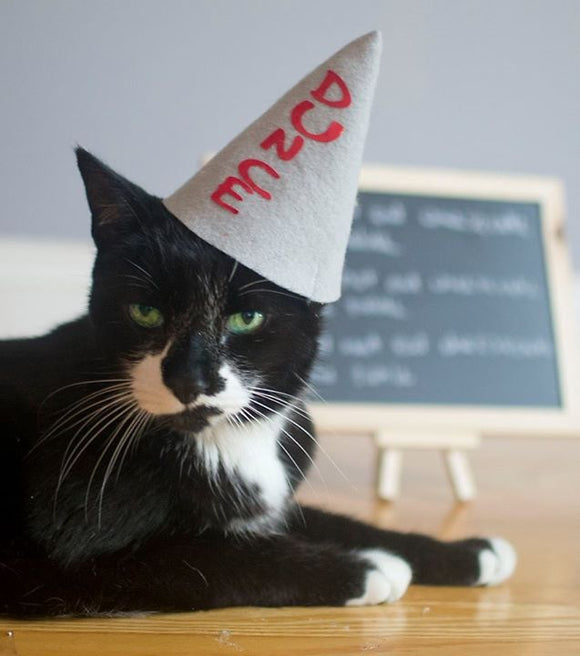 Dunce Kitty Cat Hat