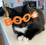 Boo! Glasses for Cats