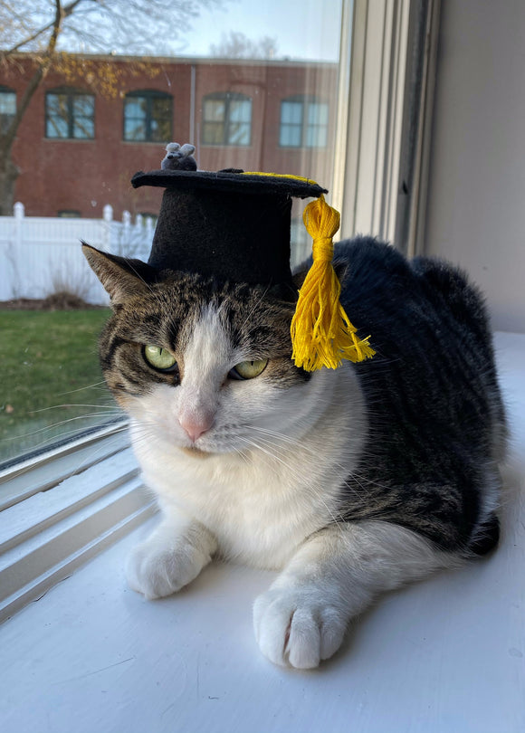 Graduation Kitty Cap for Cats