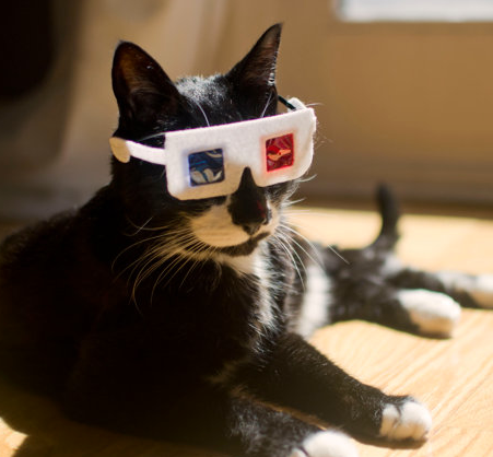 3D Glasses for Cats