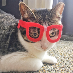 Nerd Glasses for Cats