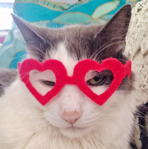 Heart Glasses for Cats