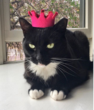 Royal Kitty Cat Crown