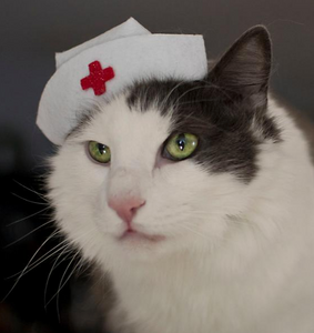 Nurse hat for Cats