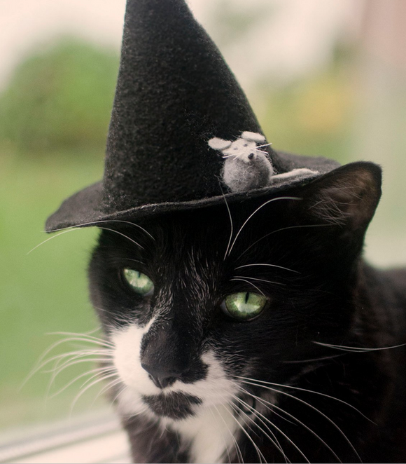 Witch Kitty of Salem Cat Hat