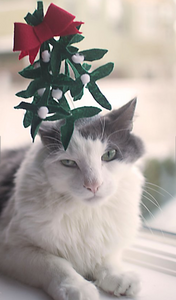 Mistletoe Cat Hat