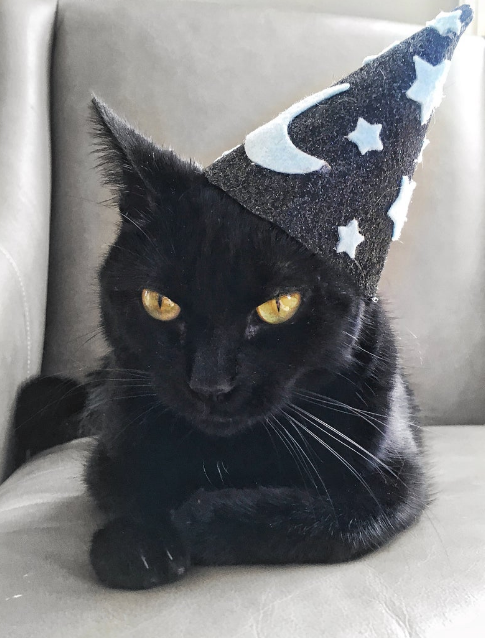 Wizard Cat Hat