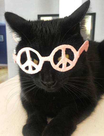 Peace Glasses for Cats