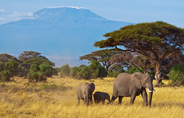 Big Report on African Elephants Offers New Spin on the Same Problems