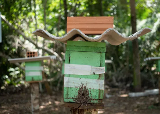 Teaching locals beekeeping can help save the Amazon forest 🐝