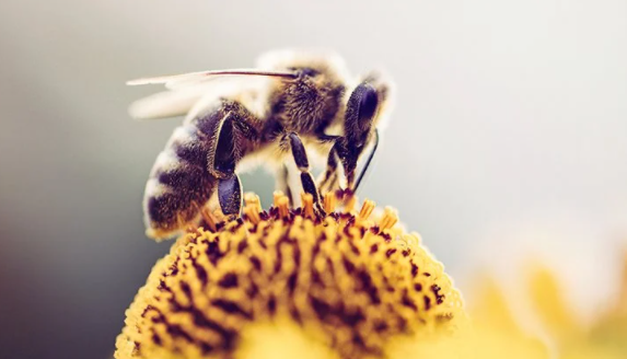 Is Mating Overrated? Meet the Honey Bees That Are Done With Males
