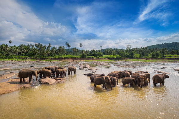 How Elephants are Fighting Global Warming