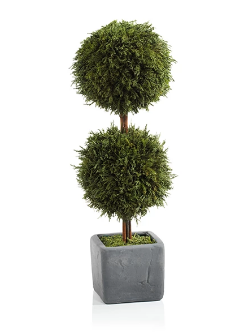 Cypress Round Topiary