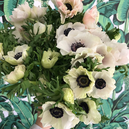 Anemone Hand Tied