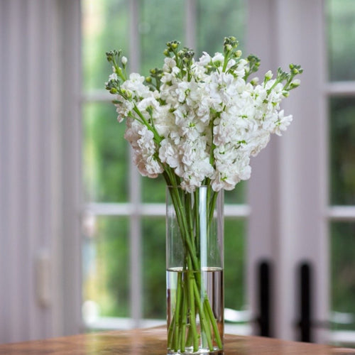 White Stock Arrangement