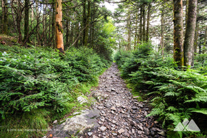 Appalachian Trail at Roan Mountain Stock Photo