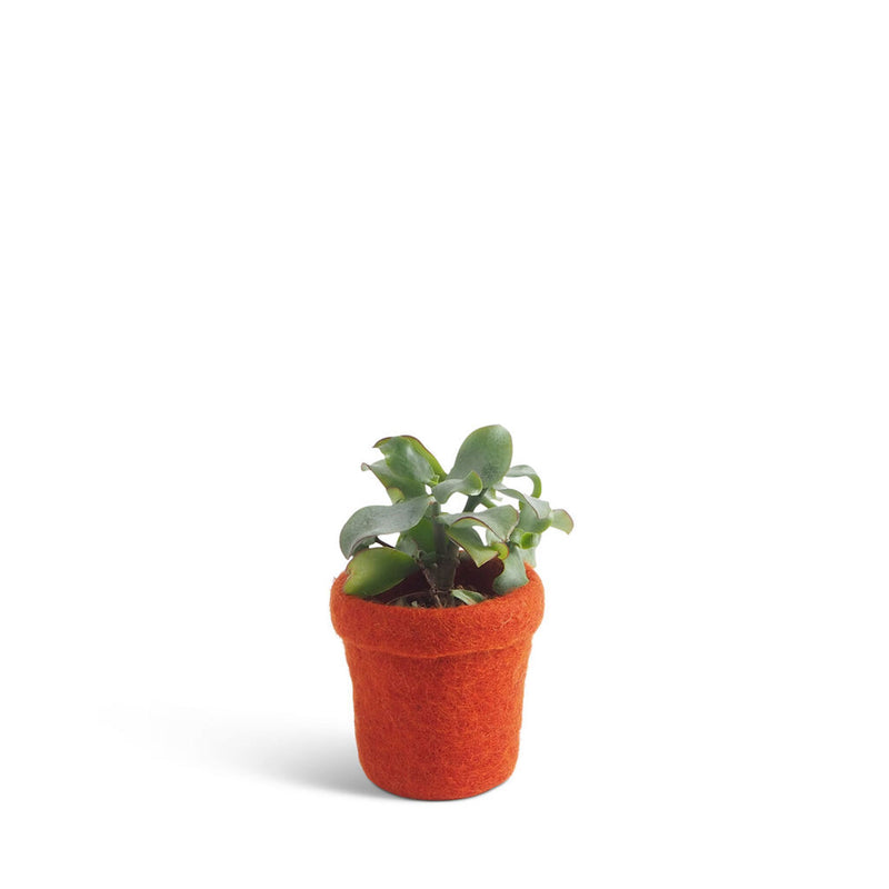 Aveva Design Tapered Wool Flower Pot