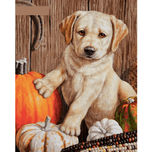 Dog And Pumpkin - Paint By Numbers Kit For Adults - Easy Paint By Number Kits for adults- DIY Animals