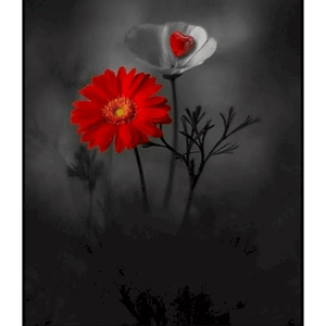 Red Flower - Paint By Numbers Kit For Adults - Easy Paint By Numbers - DIY Flowers