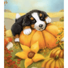 Cute Dog On Pumpkin - Paint By Numbers Kit For Adults - Easy Paint By Number Kits for adults- DIY Animals