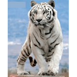 White Tiger - Paint By Numbers Kit For Adults - Easy Paint By Number Kits for adults- DIY Animals