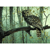 Owl - Paint By Numbers Kit For Adults - Easy Paint By Number Kits for adults- DIY Animals