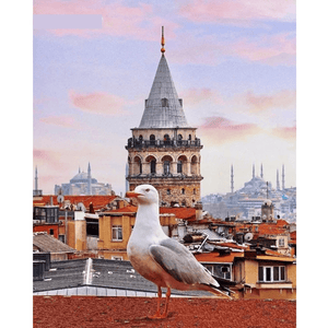 Pigeon On Roof - Paint By Numbers Kit For Adults - Easy Paint By Numbers - DIY Land