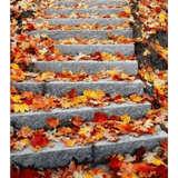 Maple Ladder Landscape - Paint By Numbers Kit For Adults - Easy Paint By Number Kits for adults- DIY Land