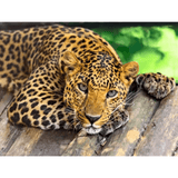 Leopard - Paint By Numbers Kit For Adults - Easy Paint By Numbers - DIY Animals
